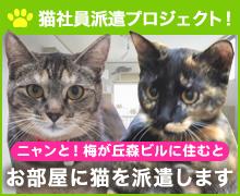 猫社員派遣プロジェクト!